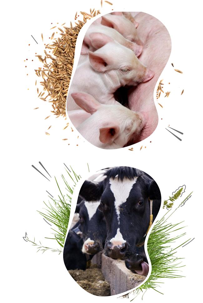 livestock-management