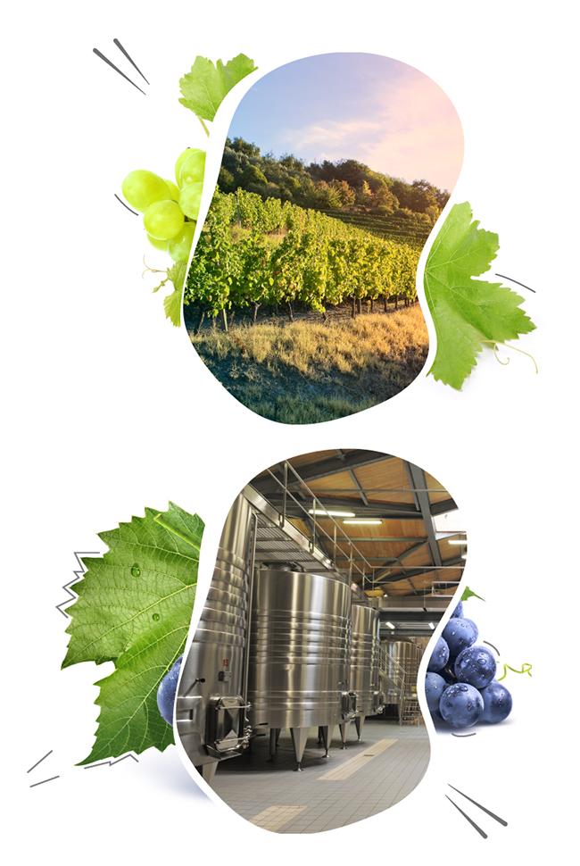 vinyard-management
